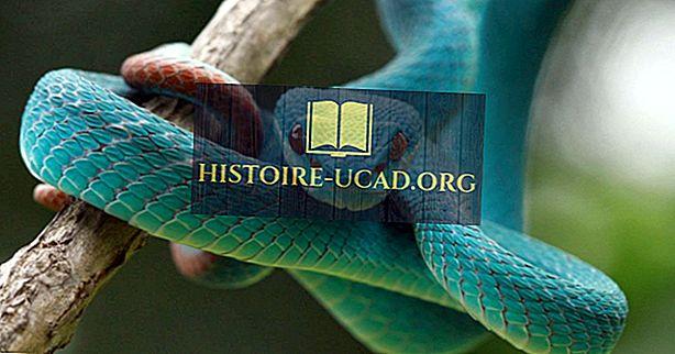Kuinka monta lajia käärmeitä on olemassa?