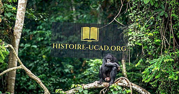 Wo ist der Kongo-Regenwald?