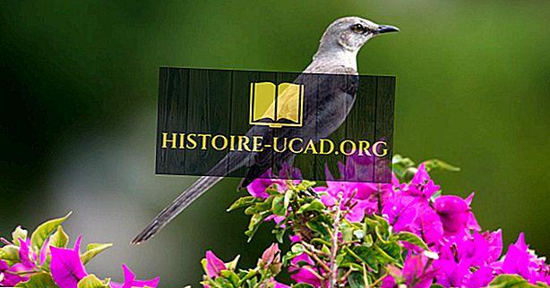 O que é o pássaro do estado da Flórida?