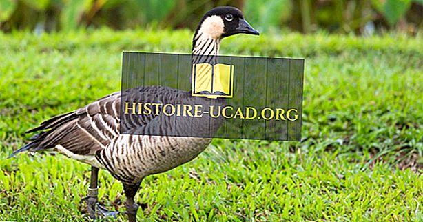 Шта је птица држава Хаваии?