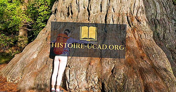 Giant Sequoia: Τα μεγαλύτερα δέντρα του κόσμου