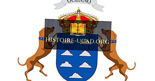 Bạn có biết rằng Quần đảo Canary được đặt theo tên của những con chó?