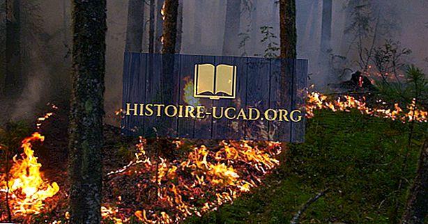 Maior pincel e incêndios florestais no histórico registrado