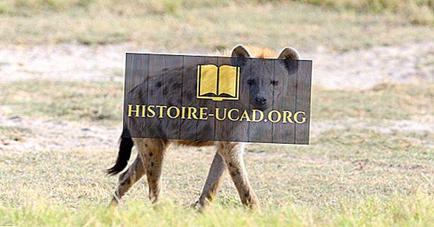 Ile typów hien żyje dzisiaj na świecie?