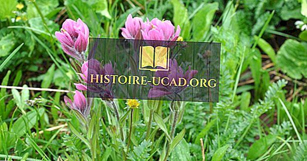 와이오밍주의 꽃은 무엇입니까?  와이오밍 주립 꽃