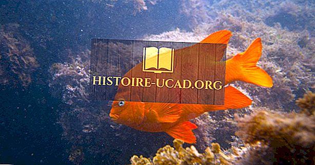 कैलिफोर्निया राज्य मछली क्या है?