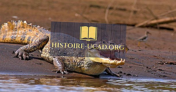 Факти на крокодила - животни от света