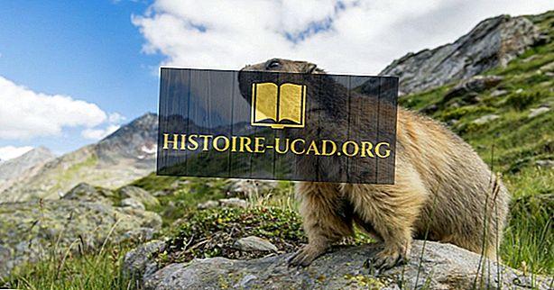 Haiwan yang ditemui di Switzerland