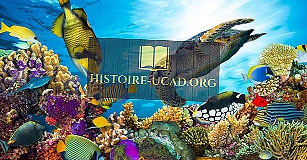 A világ leghosszabb korallzátonyai
