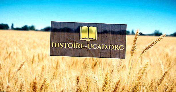 hechos mundiales - Principales países productores de trigo