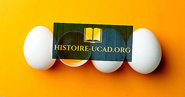 световни факти - Топ страни за производство на яйца в света