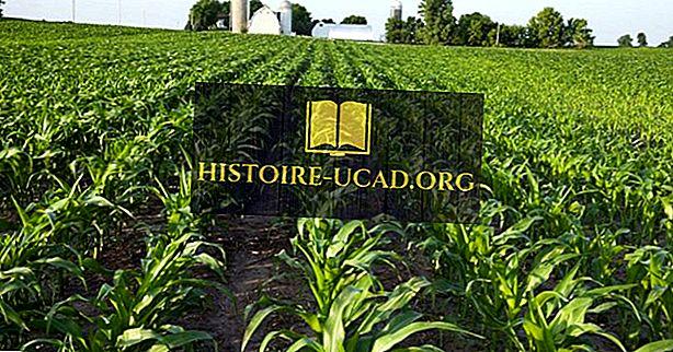 световни факти - Световни лидери в производството на царевица (царевица), по страни