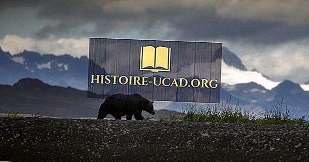 Waar leven de grizzlyberen?