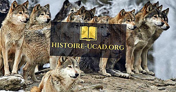 Gdzie żyją wilki?