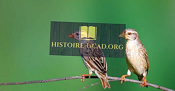 световни факти - Най-разпространените птици в света