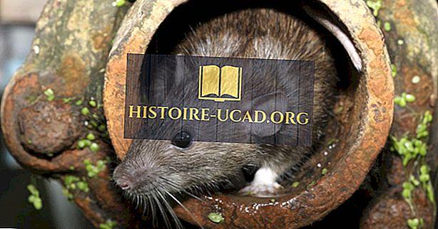 كم عدد الفئران في العالم؟