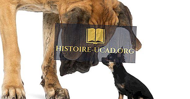 Dünyanın En Büyük Köpek Irkları