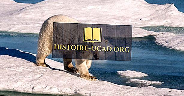 ¿Cuáles son las especies de osos más grandes?
