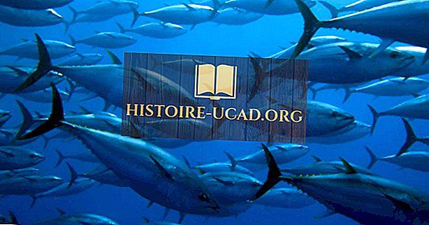 Защо и кога се отбелязва Световният ден на рибата тон?