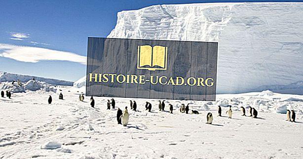 Kas yra vardų kilmė Arkties ir Antarktidoje?