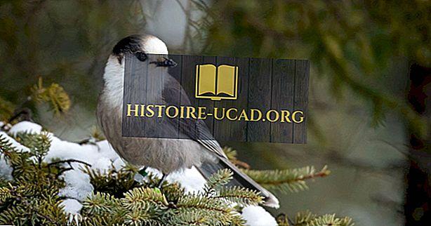 Hvad er Canadas National Bird?